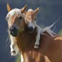 Horses4Ever