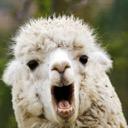 Snazzy Llamaguin Of LlamaLland